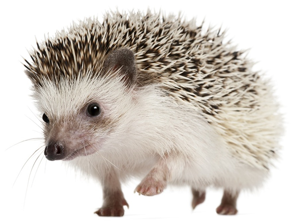 WCVC-Slider-2_0006_Hedgehog-3